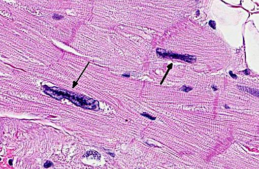 Cells Cells